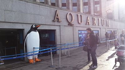 london aquarium