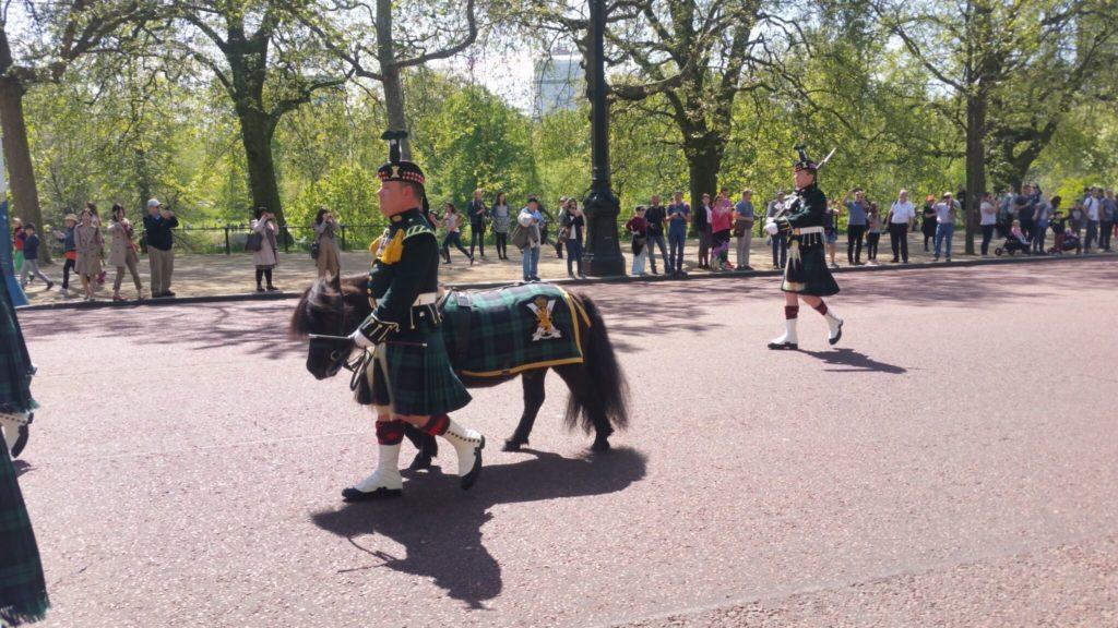 Mascot of Royal Regiment of Scotland
